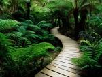 path in lush vegetation