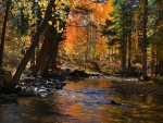 Robinson Creek in Autumn, Sierra Nevada
