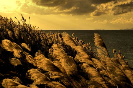 *Autumnal light in the seascape* - autumn color, autumn, seascapes, flowers, sunset, seasons, clouds, sea