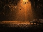 Autumn rain in the park