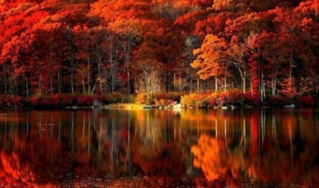 Fall reflection - fall leaves, nature, trees, lake