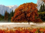 red fall leaves tree