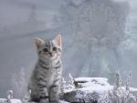 Spirit of the cat (snow leopard)