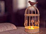 *Bird candle*