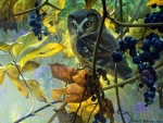 Owl and Wild Grapes