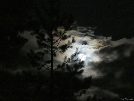 Moon - nigth, clouds, pine, sky