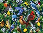 Birds and Blossoms F