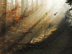 Morning of light