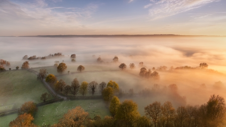morning fog over sheep pastures - sheep, pastures, morning, trees, aerial, fog