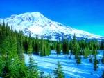 Fir forest in mountains