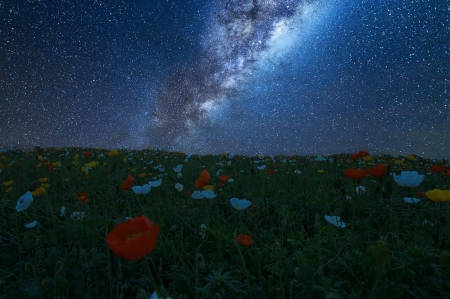 Milky Way - flowers, milky way, nature, sky