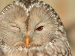 ~  Owl you all doing? ~