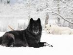 Banff Winter Magic