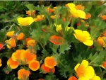 Exotic Yellow Flowers