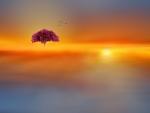 The tree of dreams