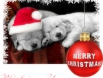 Wishing you a MERRY CHRISTMAS ♥