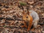 Squirrel foliage