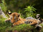 Cute Cub in the Forest
