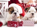 Christmas puppies