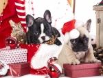 Christmas puppies