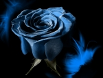 Blue Rose of my Heart