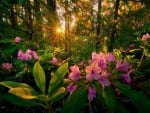 Forest Flowers At Sunset