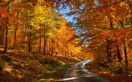 Forest Road - forest, fall leaves, autumn, beautiful, road, trees, hill