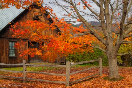 Wooden house in autumn - fence, fall, autumn, hut, house, cottage, beautiful, foliage, countryside, tree, wooden