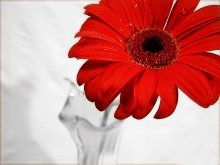 Vase With Red Gerbera Photography Abstract Background Wallpapers