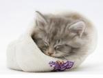 kitten asleep a woolly hat