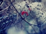Red berry branches