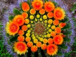Rare Cactus Flowers