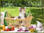 A picnic with cat