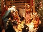 christmas,lights,trees,animals,
