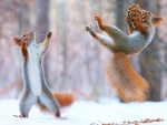 Squirrel Sports
