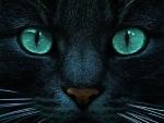 'eerie eyes'....