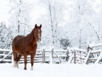 Brown horse in the winter