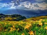 Mountain Slopes