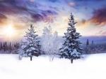 Amazing winter sky