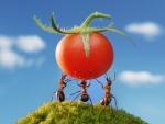 Tomatoe festin