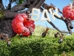 Bat for ants