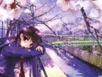 sakura spring