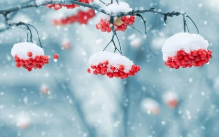 Winter & Nature Background Wallpapers
