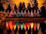Christmas Trees Reflection
