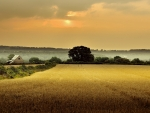 golden field in gloucestershireengland