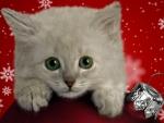 The Cutest Christmas Kitten