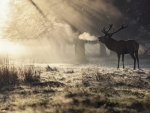 Deer in the Winter