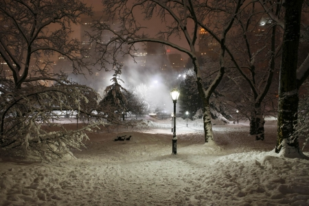 Cold Winter Nights - charm, beautiful, trees, fog, lights, winter, cold, cool, snow, shadows, nature, season, white, night