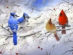 Winter Blue & Cardinals
