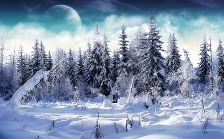 snow forest - nature, winter